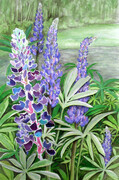Lupine Garden Collage